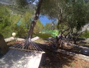 Olive garden with hammocks